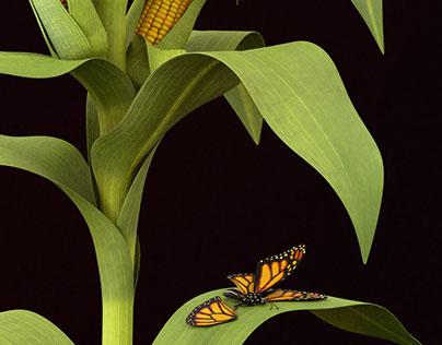 Transgenic plants: Corn Bt and Soya Rr