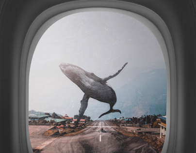 Whale 747 - The big take off.
