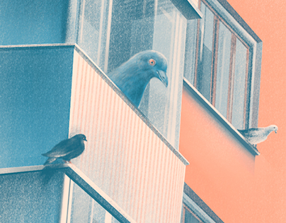 Houses and pigeons