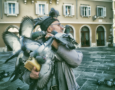 the Man of Pigeons