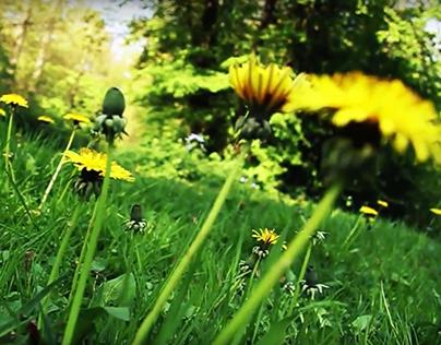 """Short video """"Dandelions"""""""
