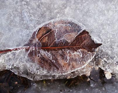 foglia sotto il ghiaccio