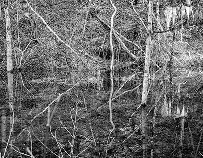 Natual Illusions Trompe d`oeil de la nature