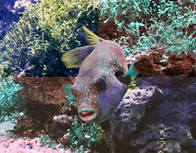 fish (hellabrunn munich)