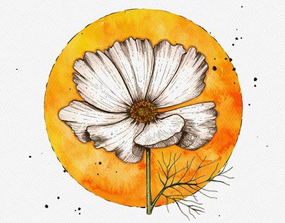Creative flowers