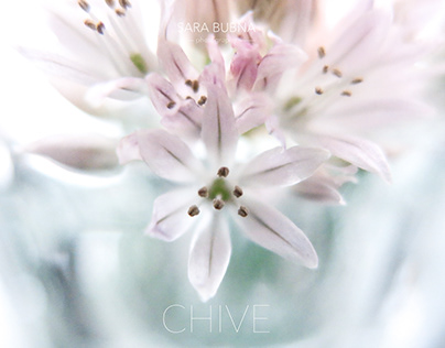 Beautiful Chive Flower by SARA BUBNA photography