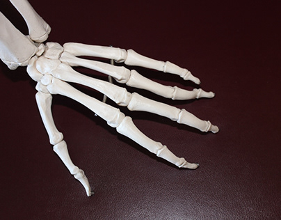Chiropractor Tips to Keep your Bones Healthy