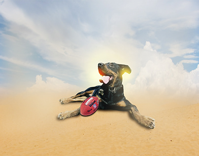 photo manipulation of my dog