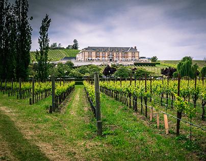 Napa Valley/Vineyards