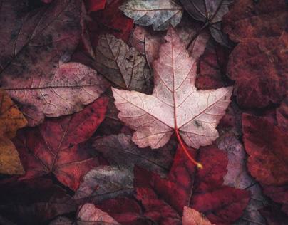 Autumn21