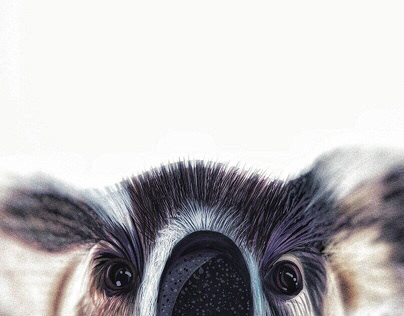 Illustration: Koala