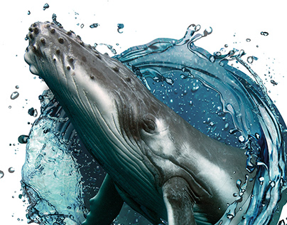 A Ilha das Baleias Jubarte