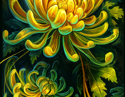 Chrysanthemum Sun