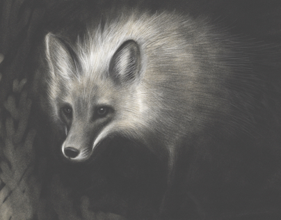 Woodland creatures: Adobe Sketch