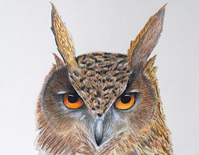 Owl mixed media
