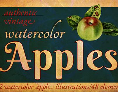 Authentic Vintage Watercolor Apples Vol. 1