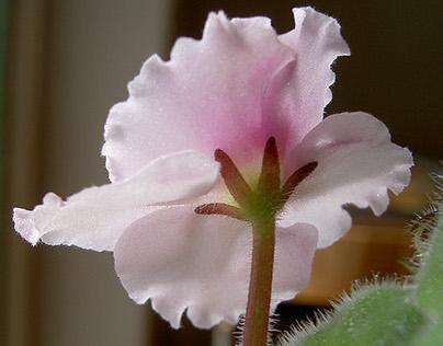 Macro Flowers and Plants 2001-2013