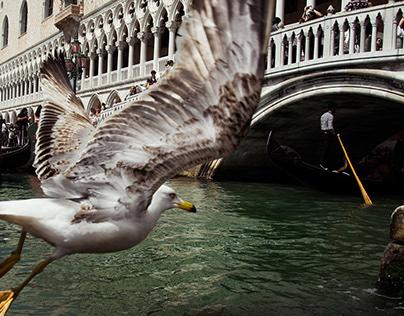 Tribute to Urban Birds