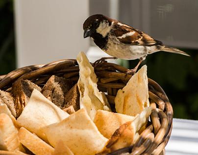 Ristorante GILDA - Forte dei Marmi - food & interior