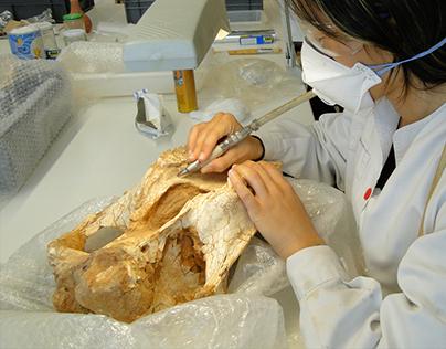 Conservation - Restoration of cultural heritage.