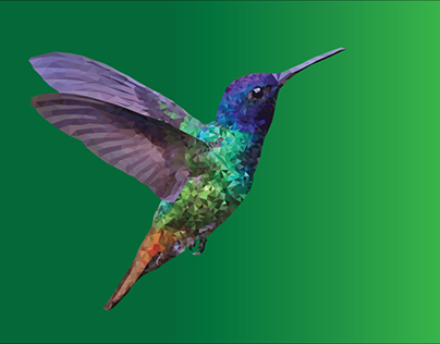Hummingbird Illustration