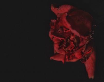 Rose Sonnambule