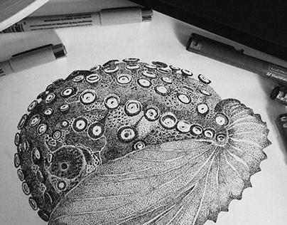 Illustrations of octopus