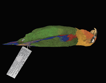 Bird Taxonomy - Digital Illustration