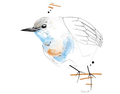 Oiseaux des Vosges du Nord | 2020