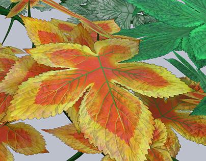 Photo-Based Realism 3d Plants
