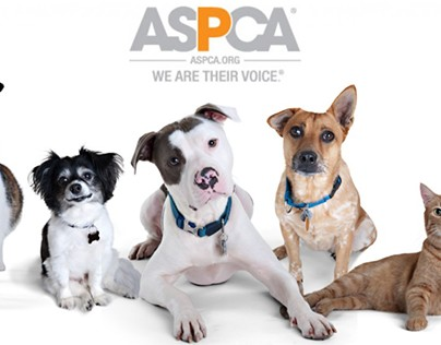 ASPCA Assists in Actions Against a Wisconsin Puppy Mill