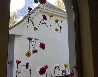 'No rain no flowers' project
