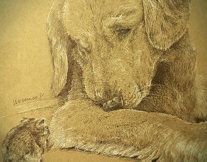 Goldenretriever & Hamster (2015)