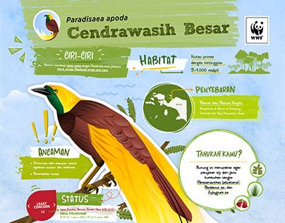WWF : Cendrawasih Infographic