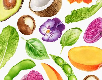 Regional Flavours illustrations