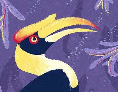 Great Hornbill / Buceros Bicornis