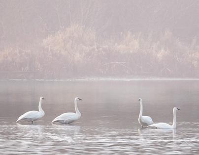 Frost and Fog at Juanita Bay