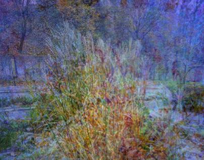 Winter surrounds