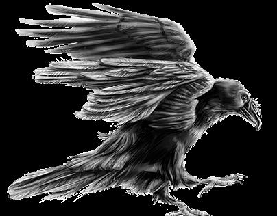 NPS Ravens