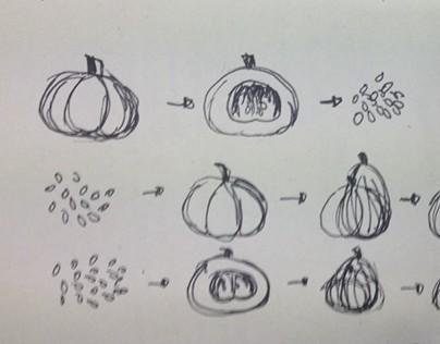 Pumpkin fruit anatomy