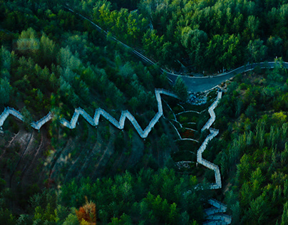 Trails In The Forest