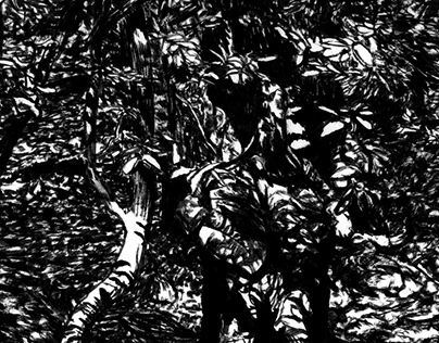 Shadows in the Woods
