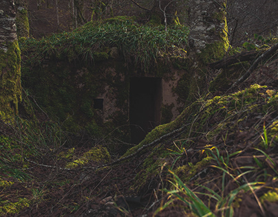 Old Bunker in The Forest