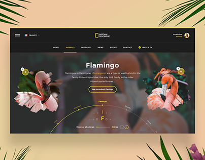 🌺🦚🐹 National Geographic — Website Concept