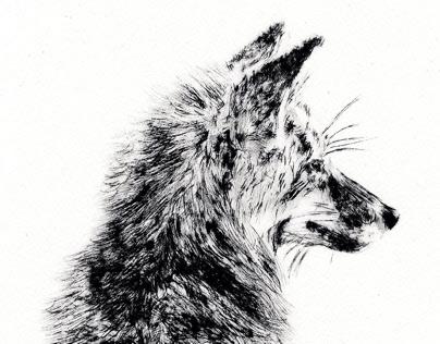 Lancashire Fauna | Printmaking