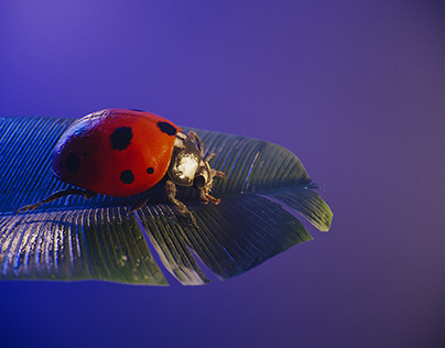 Insects_Fanart_