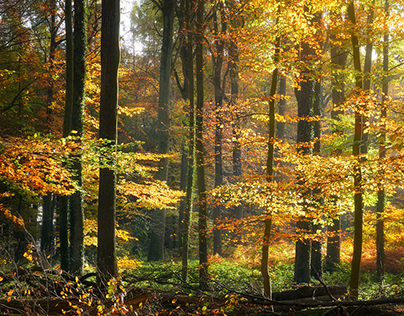 In the autumn forest