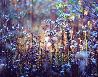 Among Flowers & Plants