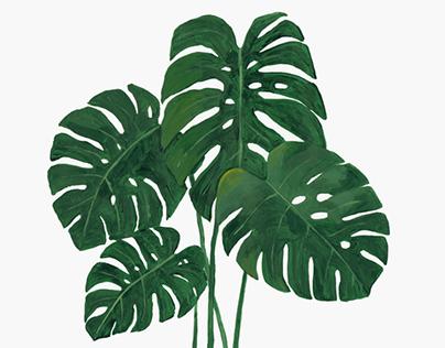 Plantas en papel I
