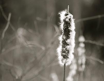 Wetlands, Early Spring